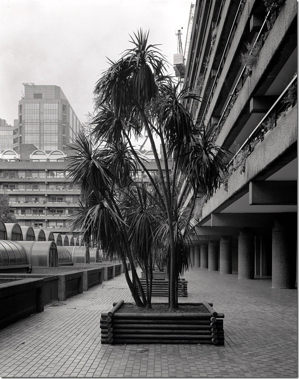 006-architectural-plantings