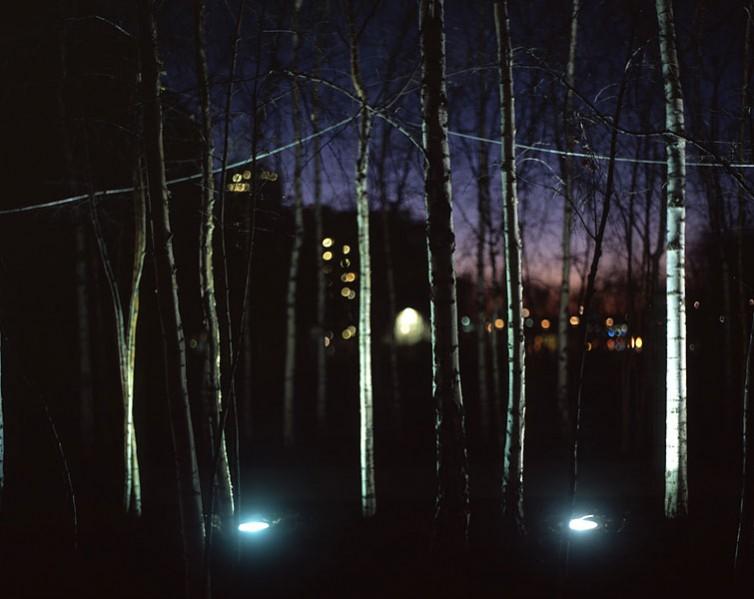 Urban Trees 01.11/36