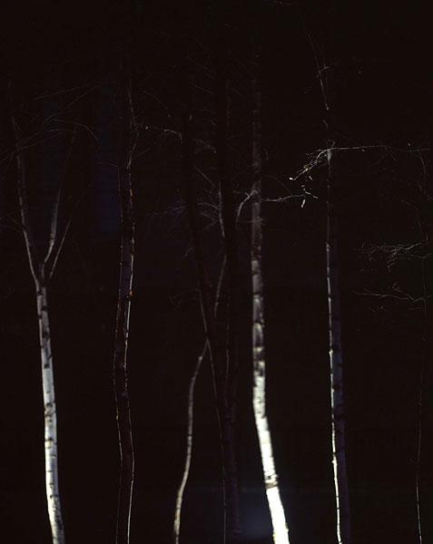 Urban Trees 03.13/36