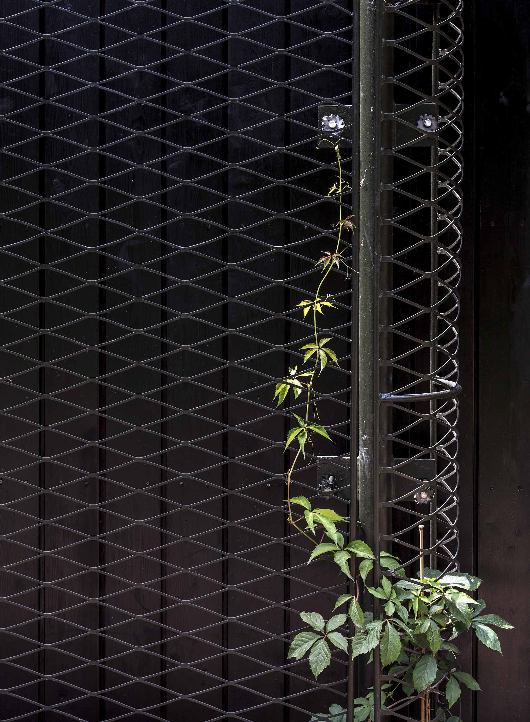 Exterior photography showing the planting strategy with mesh to echo the existing structure's appearance.